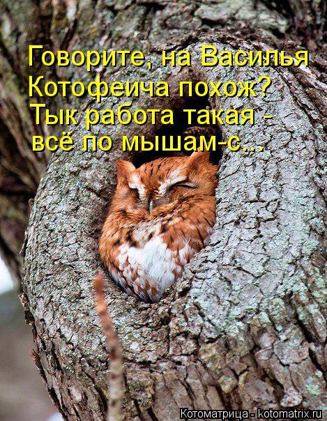 Котоматрица: Говорите, на Василья  Котофеича похож? Тык работа такая - всё по мышам-с...