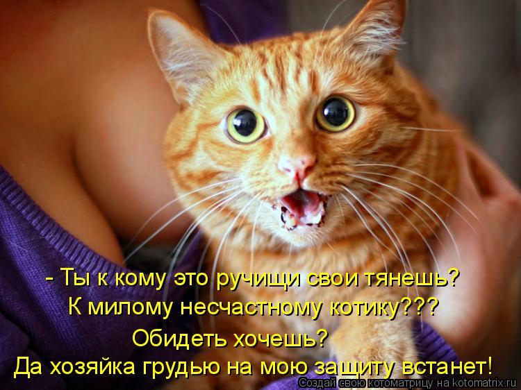 Котоматрица: - Ты к кому это ручищи свои тянешь? К милому несчастному котику??? Обидеть хочешь? Да хозяйка грудью на мою защиту встанет!