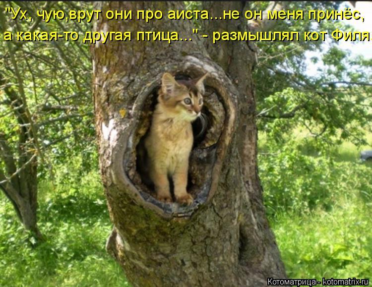 """Котоматрица: """"Ух, чую,врут они про аиста...не он меня принёс, а какая-то другая птица..."""" - размышлял кот Филя."""