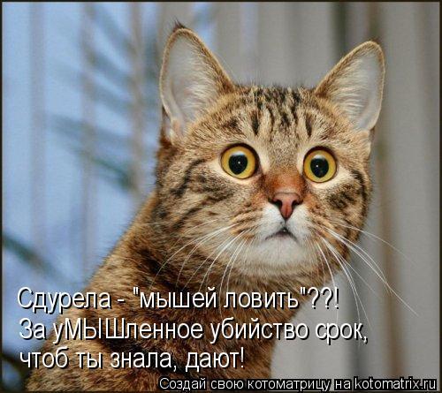 """Котоматрица: Сдурела - """"мышей ловить""""??! За уМЫШленное убийство срок,  чтоб ты знала, дают!"""