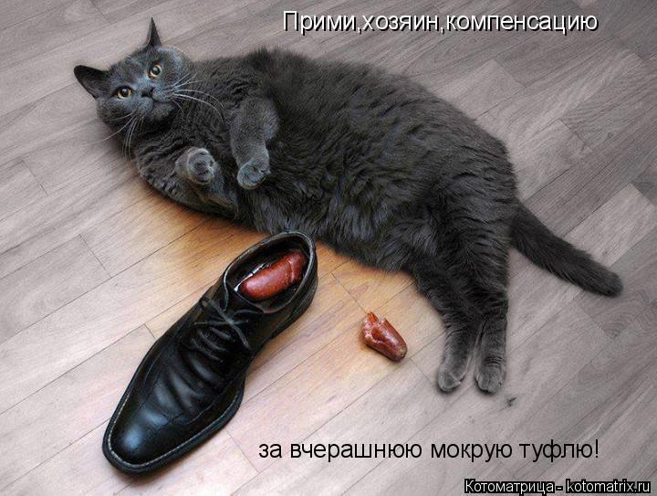 Котоматрица: Прими,хозяин,компенсацию за вчерашнюю мокрую туфлю!
