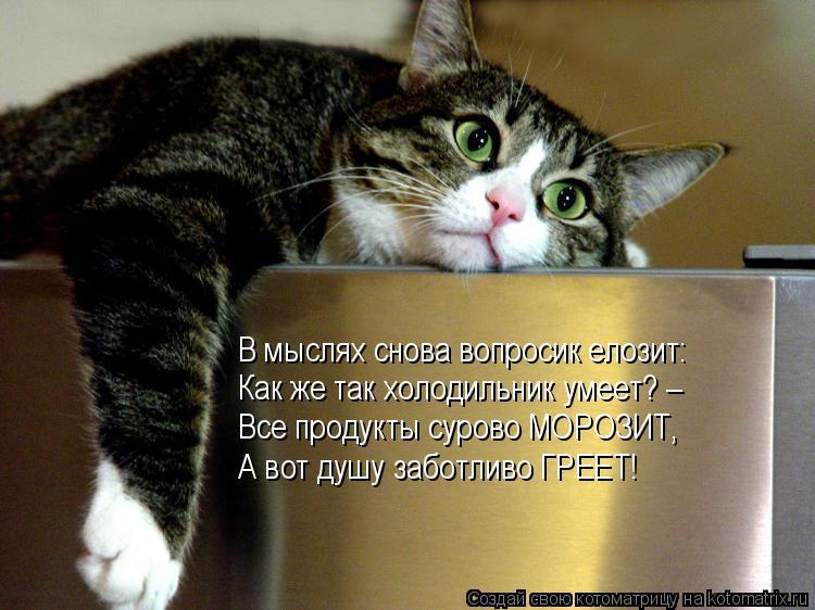 Котоматрица: В мыслях снова вопросик елозит: Как же так холодильник умеет? – Все продукты сурово МОРОЗИТ, А вот душу заботливо ГРЕЕТ!