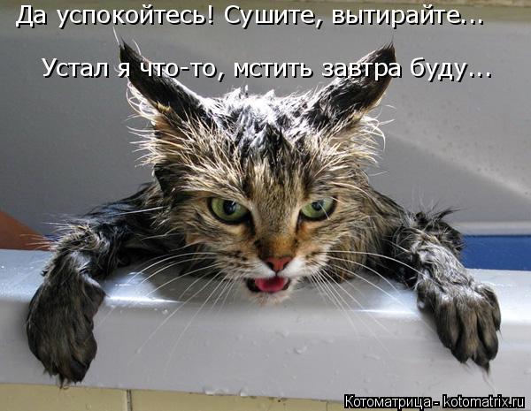 Котоматрица: Да успокойтесь! Сушите, вытирайте... Устал я что-то, мстить завтра буду...