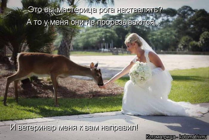 Котоматрица: Это вы-мастерица рога наставлять? А то у меня они не прорезываются... И ветеринар меня к вам направил!