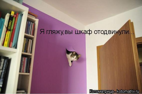 Котоматрица: Я гляжу,вы шкаф отодвинули...