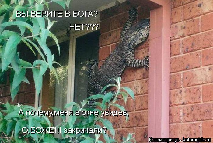 Котоматрица: ВЫ ВЕРИТЕ В БОГА? НЕТ??? А почему,меня в окне увидев, О,БОЖЕ!!! закричали?