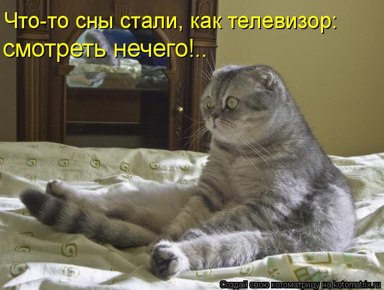 Котоматрица: Что-то сны стали, как телевизор: смотреть нечего!..