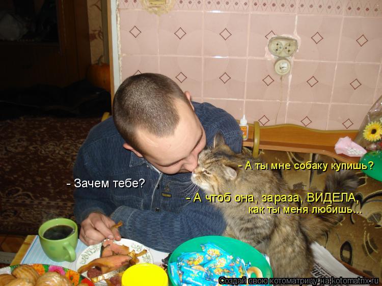 Котоматрица: - А ты мне собаку купишь? - Зачем тебе? - А чтоб она, зараза, ВИДЕЛА, как ты меня любишь...