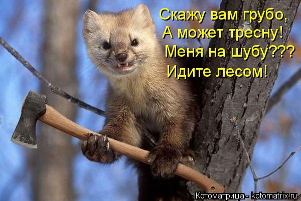 Котоматрица: Скажу вам грубо, А может тресну! Меня на шубу??? Идите лесом!