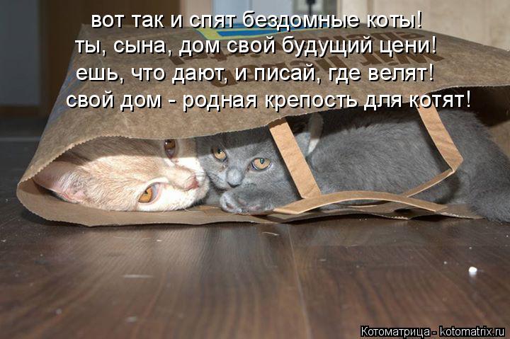 Котоматрица: вот так и спят бездомные коты! ты, сына, дом свой будущий цени! ешь, что дают, и писай, где велят! свой дом - родная крепость для котят!