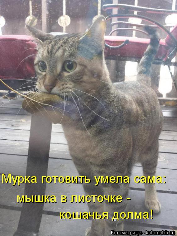 Котоматрица: Мурка готовить умела сама: мышка в листочке -  кошачья долма!