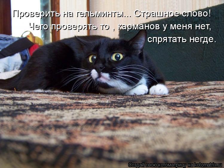 Котоматрица: Проверить на гельминты... Страшное слово! спрятать негде. Чего проверять то , карманов у меня нет,