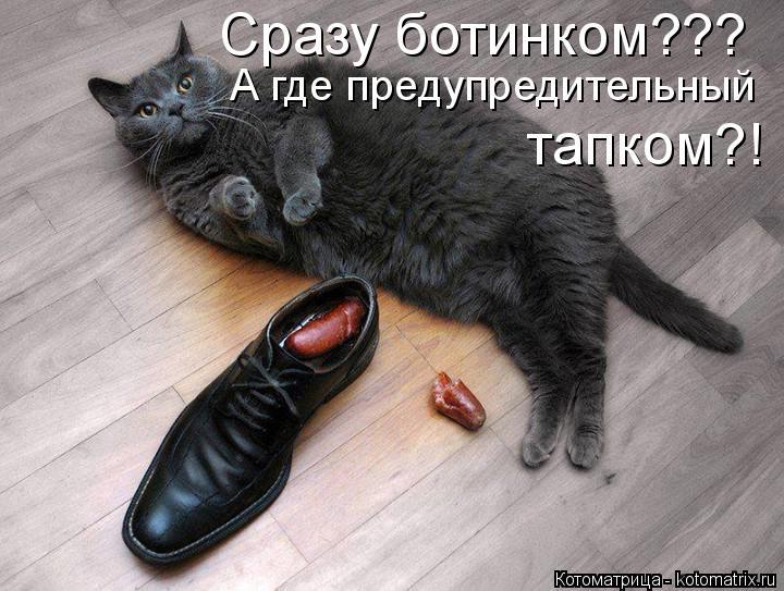 Котоматрица: Сразу ботинком??? А где предупредительный  тапком?!