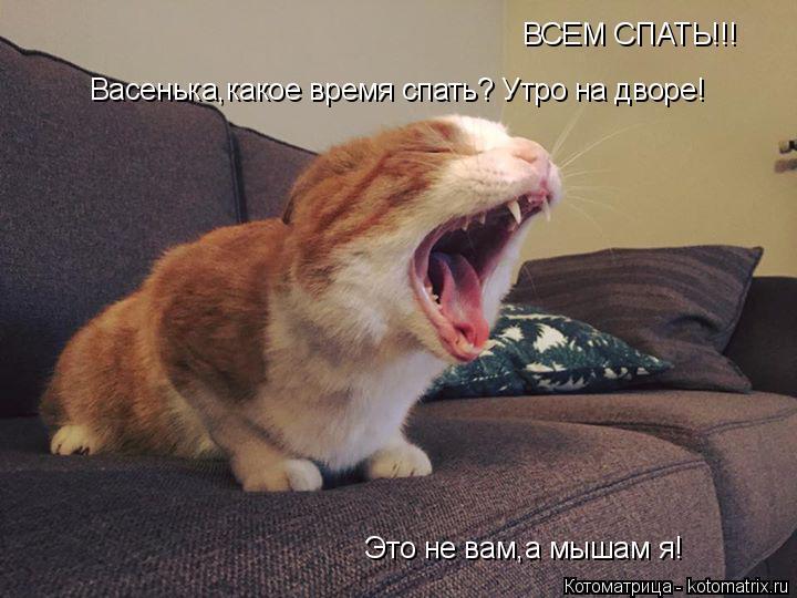 Котоматрица: ВСЕМ СПАТЬ!!! Васенька,какое время спать? Утро на дворе! Это не вам,а мышам я!