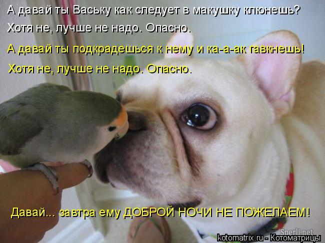 Котоматрица: А давай ты Ваську как следует в макушку клюнешь? Хотя не, лучше не надо. Опасно. А давай ты подкрадешься к нему и ка-а-ак гавкнешь! Хотя не, луч