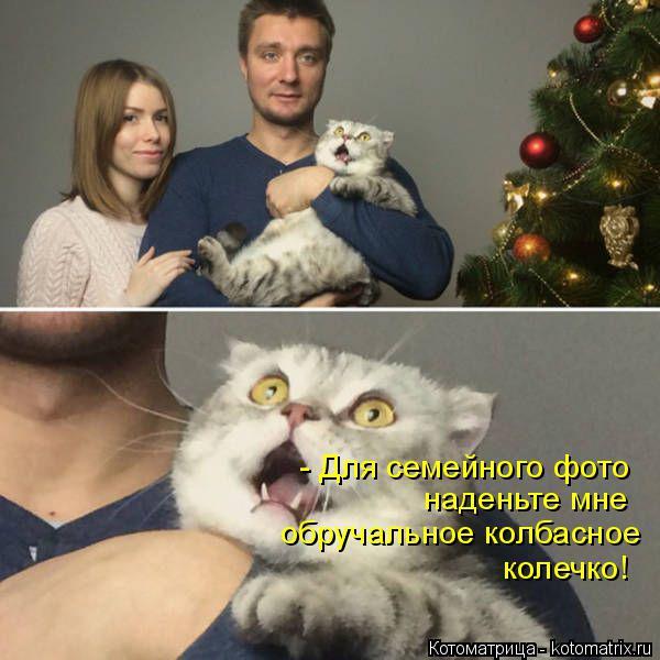Котоматрица: - Для семейного фото наденьте мне  обручальное колбасное  колечко!