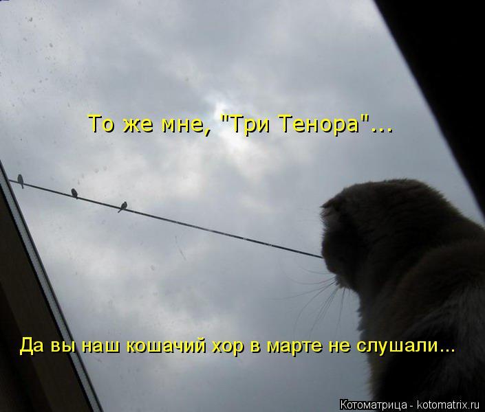 "Котоматрица: То же мне, ""Три Тенора""... Да вы наш кошачий хор в марте не слушали..."