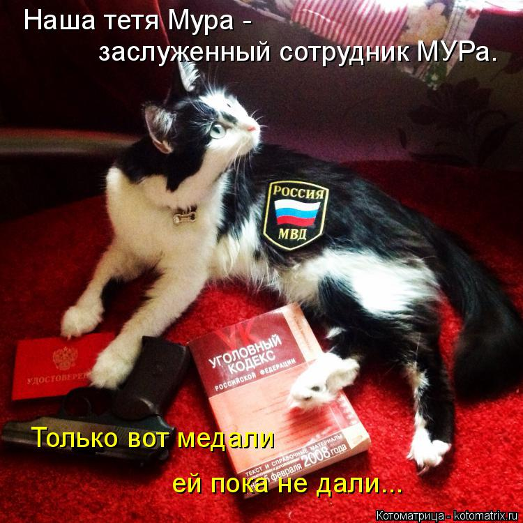 Котоматрица: Наша тетя Мура -  заслуженный сотрудник МУРа. Только вот медали ей пока не дали...