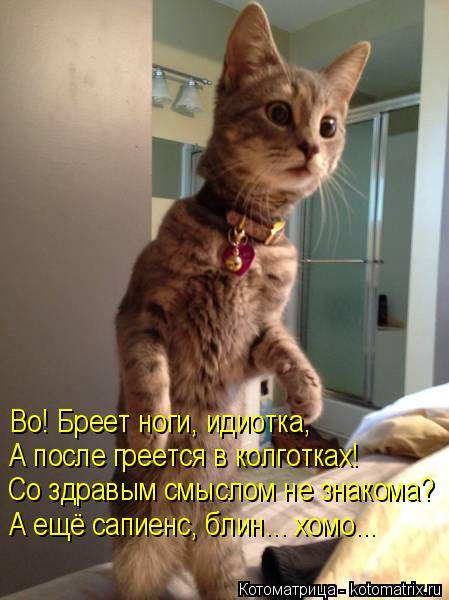 http://kotomatrix.ru/images/lolz/2015/12/10/kotomatritsa_2r.jpg