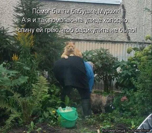 Котоматрица: Помог бы ты бабушке,Мурзик! А я и так помогаю-на улице холодно, спину ей грею,чтоб радикулита не было!