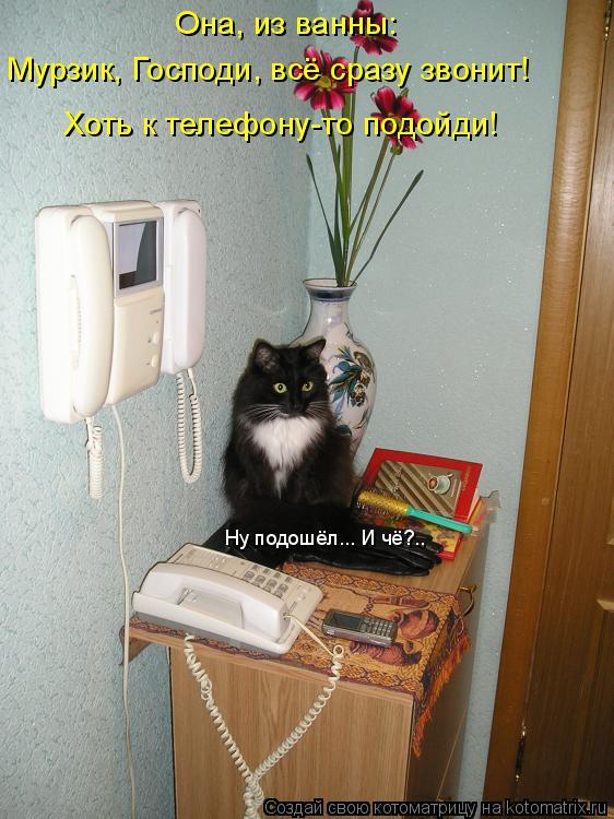 Котоматрица: Она, из ванны:  Мурзик, Господи, всё сразу звонит!  Ну подошёл... И чё?.. Хоть к телефону-то подойди!