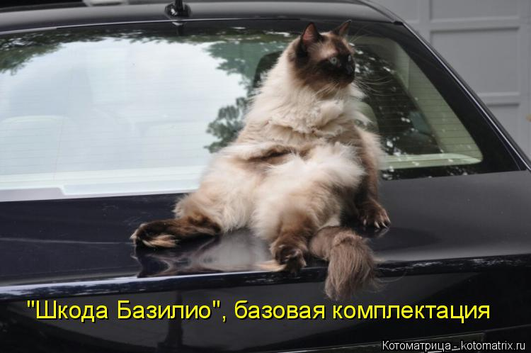 "Котоматрица: ""Шкода Базилио"", базовая комплектация"