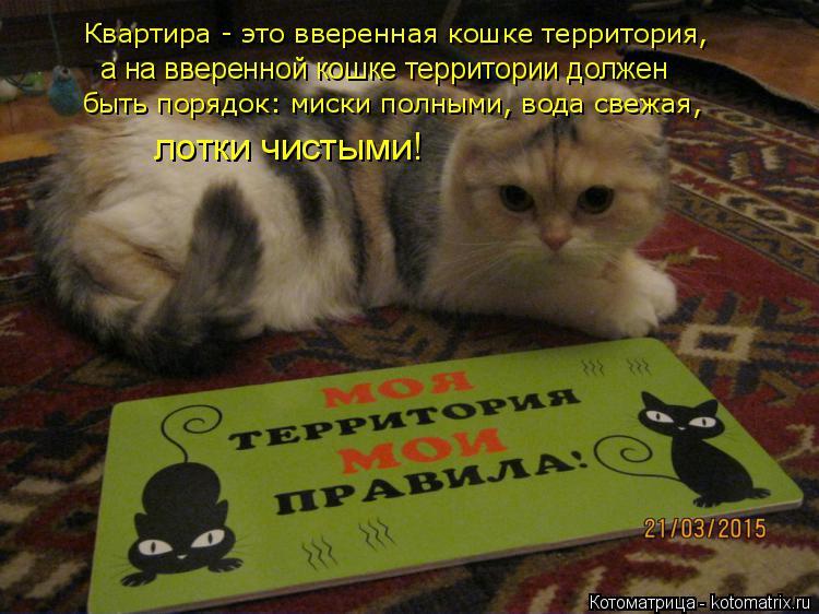 Котоматрица: Квартира - это вверенная кошке территория, а на вверенной кошке территории должен быть порядок: миски полными, вода свежая, лотки чистыми!
