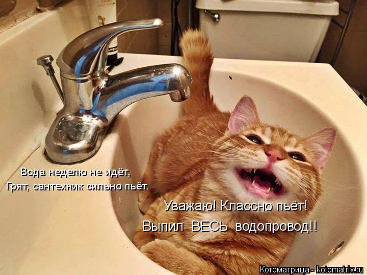 Котоматрица: Уважаю! Классно пьёт! Выпил  ВЕСЬ  водопровод!! Грят, сантехник сильно пьёт. Вода неделю не идёт,