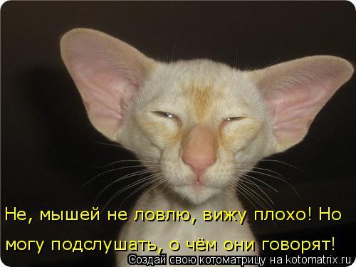 Котоматрица: Не, мышей не ловлю, вижу плохо! Но могу подслушать, о чём они говорят!