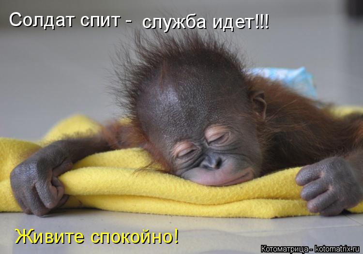 Котоматрица: Солдат спит - служба идет!!! Живите спокойно!