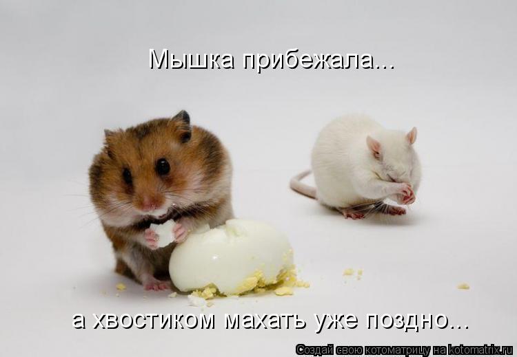 Котоматрица: Мышка прибежала... а хвостиком махать уже поздно...