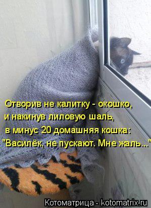 """Котоматрица: """"Василёк, не пускают. Мне жаль..."""" в минус 20 домашняя кошка: и накинув лиловую шаль, Отворив не калитку - окошко,"""