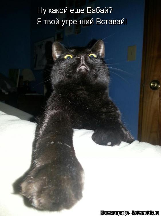 Котоматрица: Ну какой еще Бабай? Я твой утренний Вставай!
