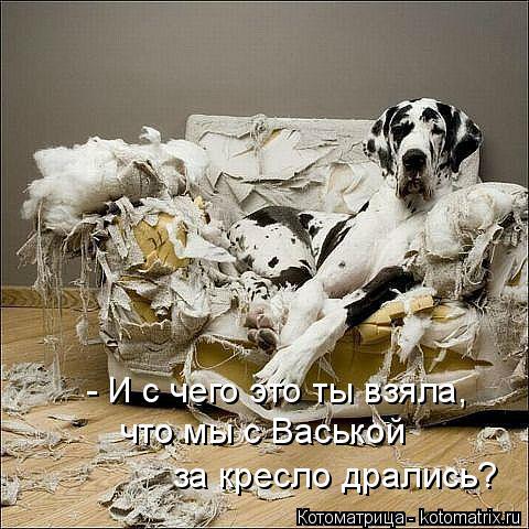 Котоматрица: - И с чего это ты взяла, что мы с Васькой за кресло дрались?