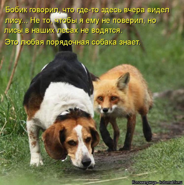 Котоматрица: Бобик говорил, что где-то здесь вчера видел  лису... Не то, чтобы я ему не поверил, но  лисы в наших лесах не водятся. Это любая порядочная собак