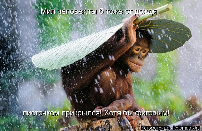 Котоматрица: Мил человек,ты б тоже от дождя  листочком прикрылся! Хотя бы фиговым!