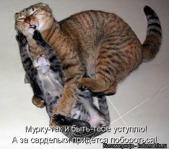 Котоматрица: Мурку-так и быть-тебе уступлю! А за сардельки придётся побороться!