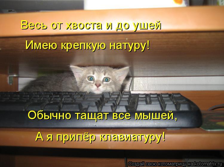 Котоматрица: Весь от хвоста и до ушей Имею крепкую натуру! Обычно тащат все мышей, А я припёр клавиатуру!