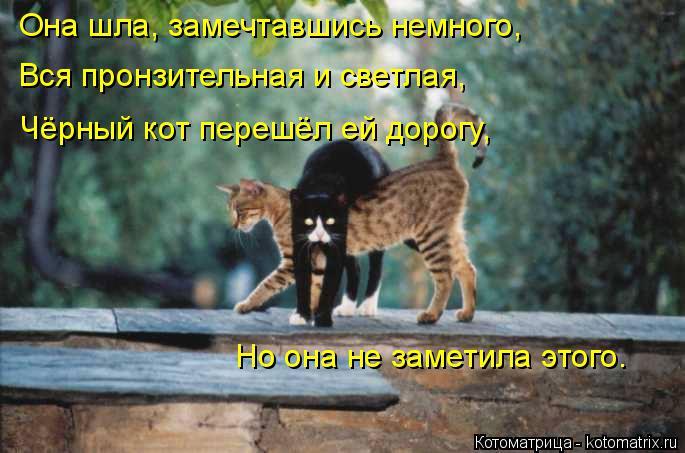 Котоматрица: Она шла, замечтавшись немного, Вся пронзительная и светлая, Чёрный кот перешёл ей дорогу, Но она не заметила этого.