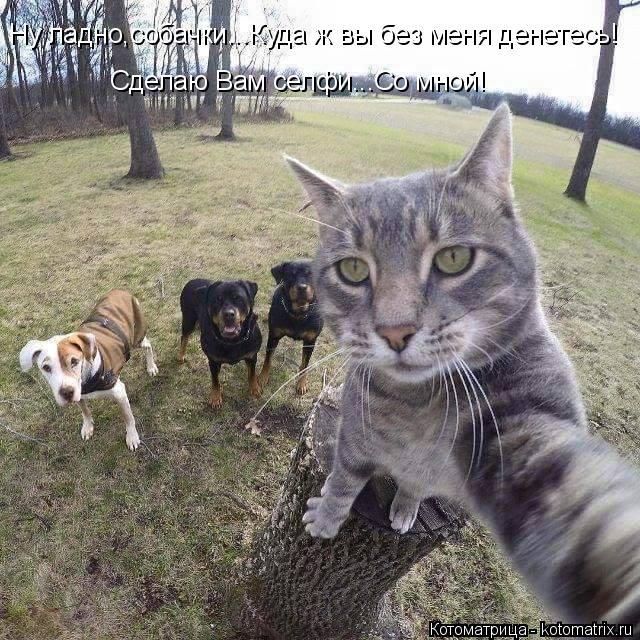Котоматрица: Ну ладно,собачки...Куда ж вы без меня денетесь! Сделаю Вам селфи...Со мной!