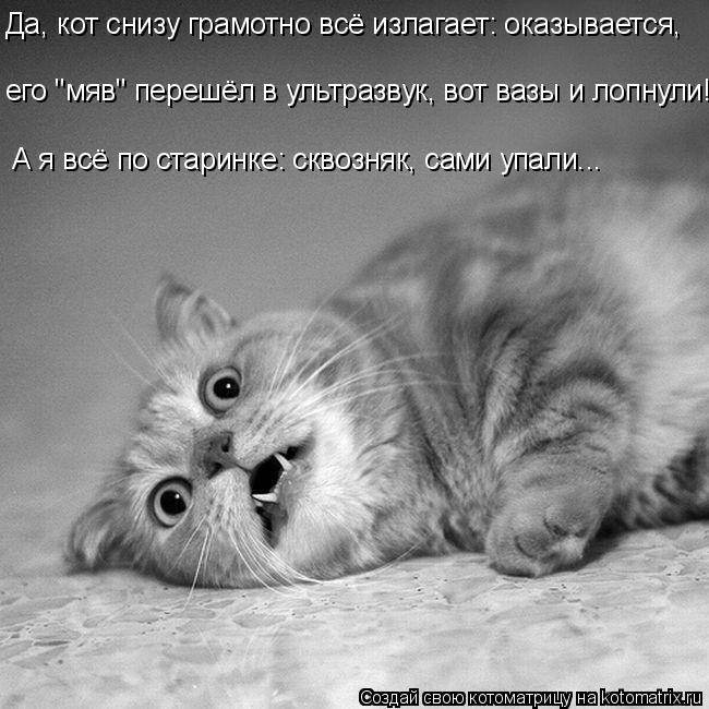 """Котоматрица: Да, кот снизу грамотно всё излагает: оказывается, его """"мяв"""" перешёл в ультразвук, вот вазы и лопнули! А я всё по старинке: сквозняк, сами упали."""