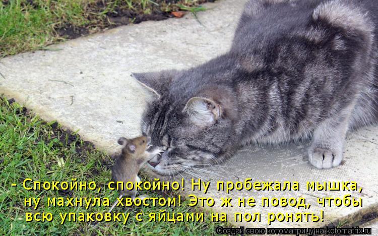 Котоматрица: - Спокойно, спокойно! Ну пробежала мышка, ну махнула хвостом! Это ж не повод, чтобы всю упаковку с яйцами на пол ронять!