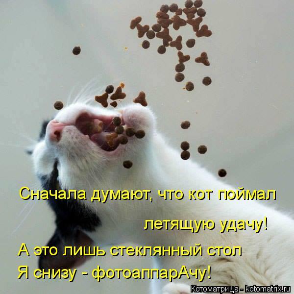 Котоматрица: Сначала думают, что кот поймал летящую удачу! А это лишь стеклянный стол Я снизу - фотоаппарАчу!
