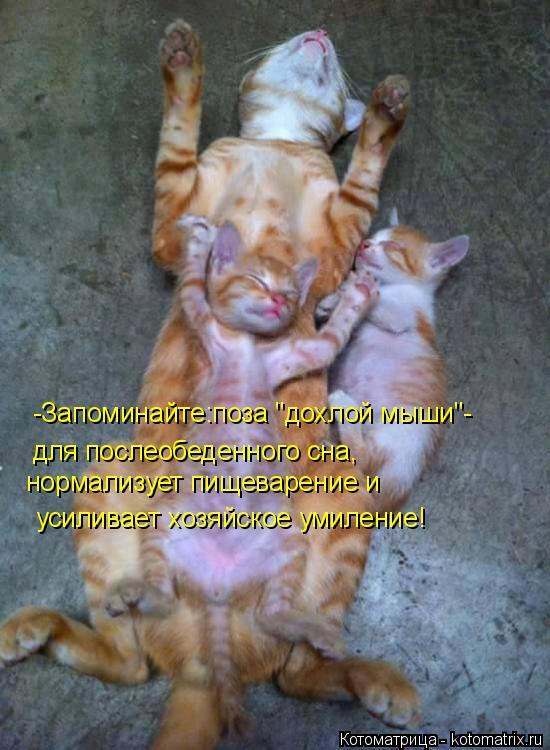 """Котоматрица: -Запоминайте:поза """"дохлой мыши""""- для послеобеденного сна, нормализует пищеварение и  усиливает хозяйское умиление!"""