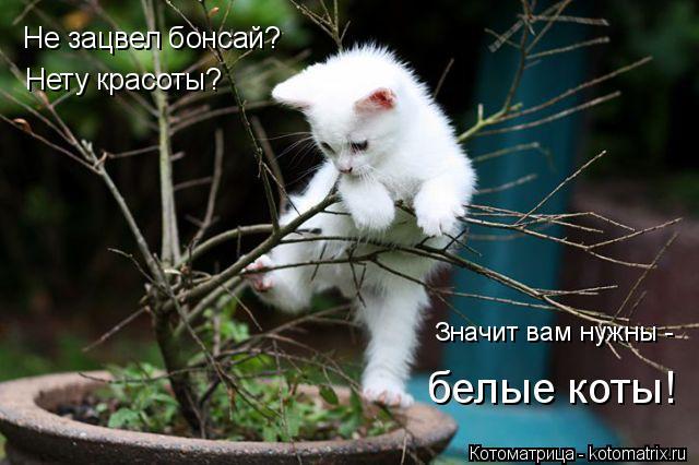 Котоматрица: Не зацвел бонсай? Нету красоты? Значит вам нужны - белые коты!