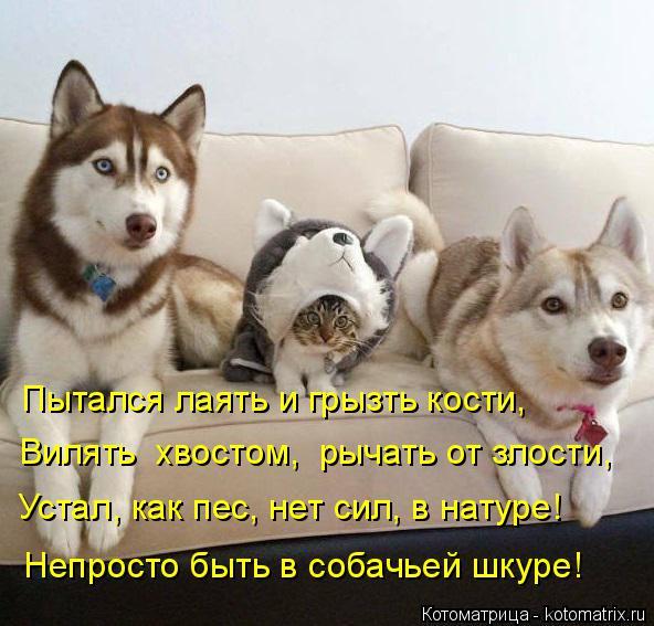 Кино новинки смотреть онлайн бесплатно Собачья жизнь
