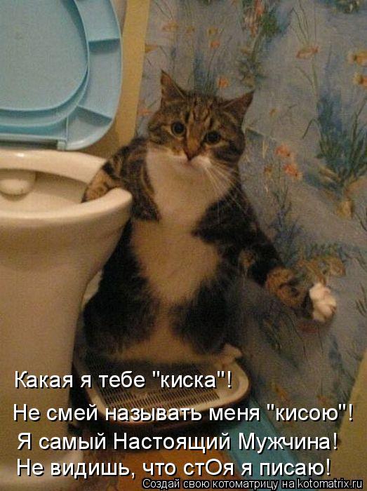 """Котоматрица: Какая я тебе """"киска""""! Не смей называть меня """"кисою""""! Я самый Настоящий Мужчина! Не видишь, что стОя я писаю!"""