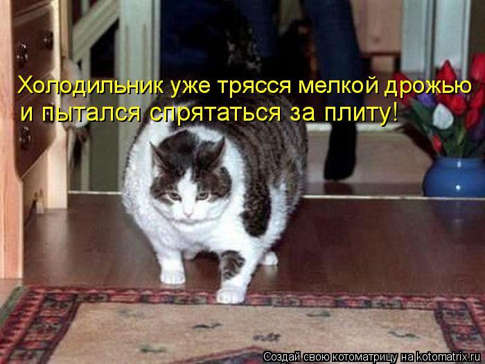Котоматрица: Холодильник уже трясся мелкой дрожью  и пытался спрятаться за плиту!