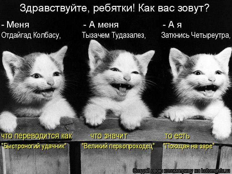 http://kotomatrix.ru/images/lolz/2015/12/20/kotomatritsa_y.jpg