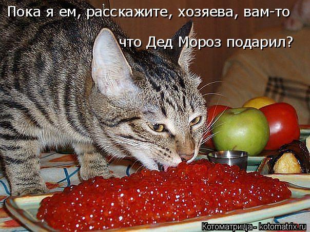 Котоматрица: Пока я ем, расскажите, хозяева, вам-то  что Дед Мороз подарил?